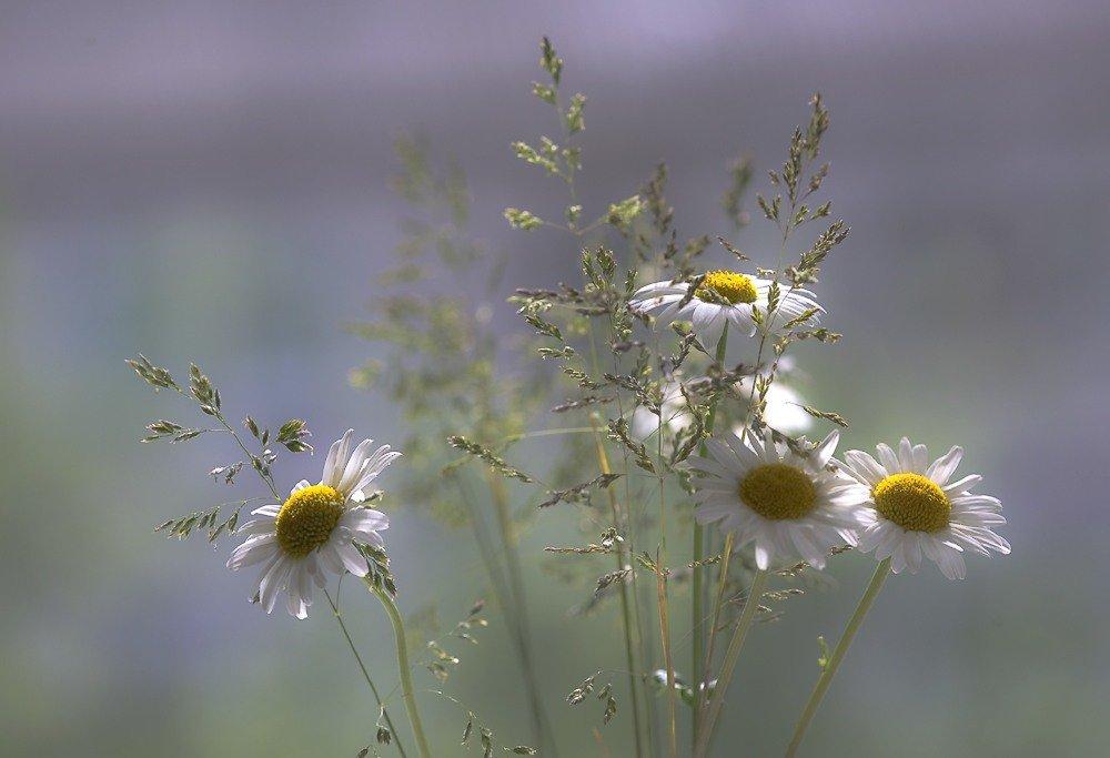 Полевые цветы красивые картинки анимации