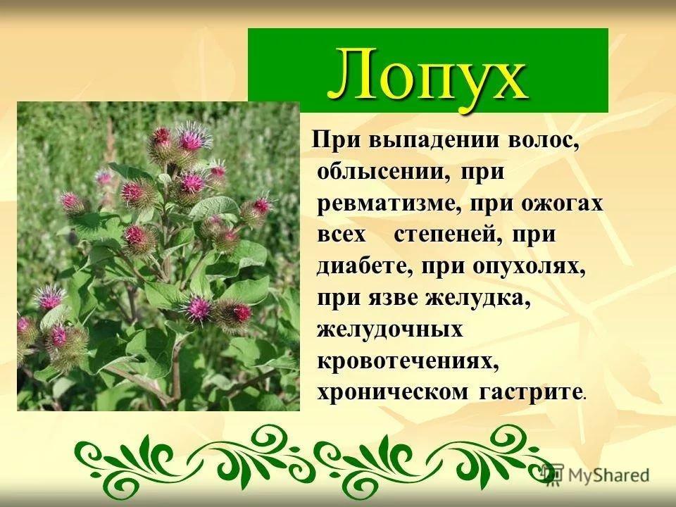 фото лекарственных растений с названиями и описанием нашего портала продолжает