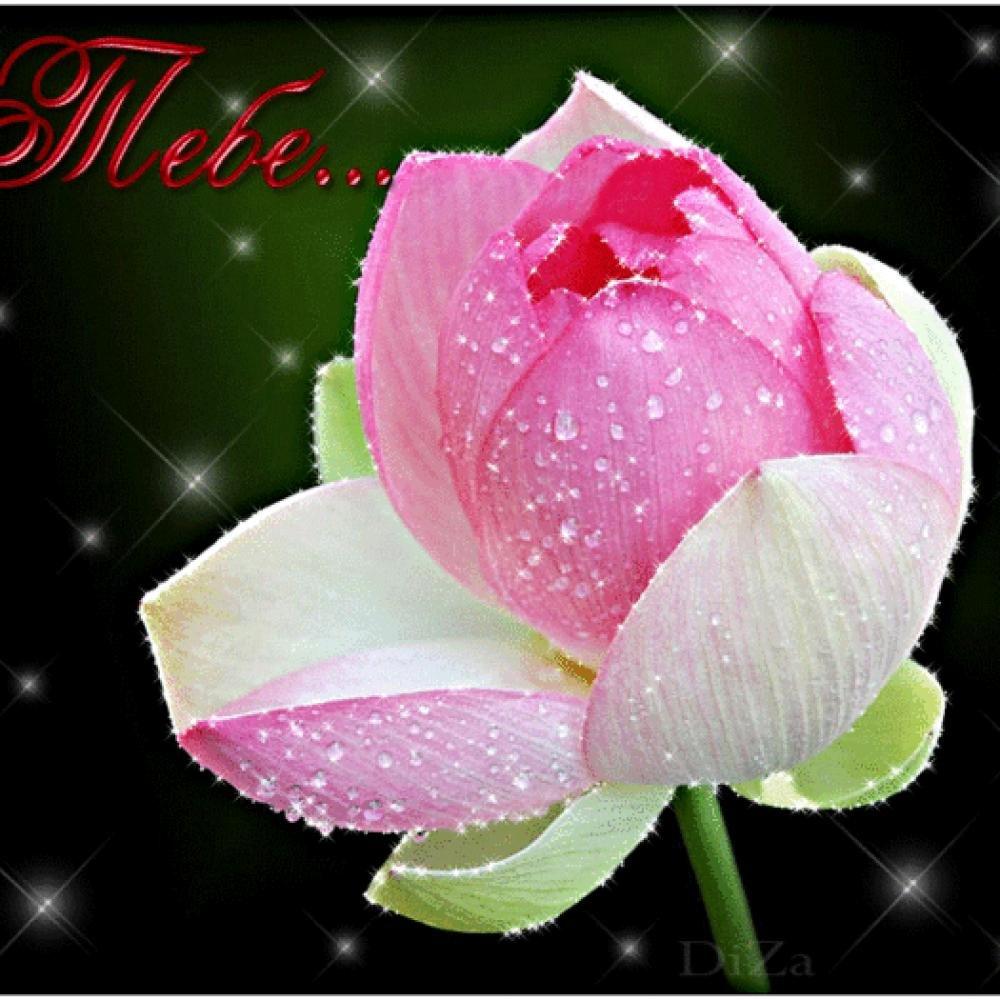 Анимированные открытки с красивыми цветами