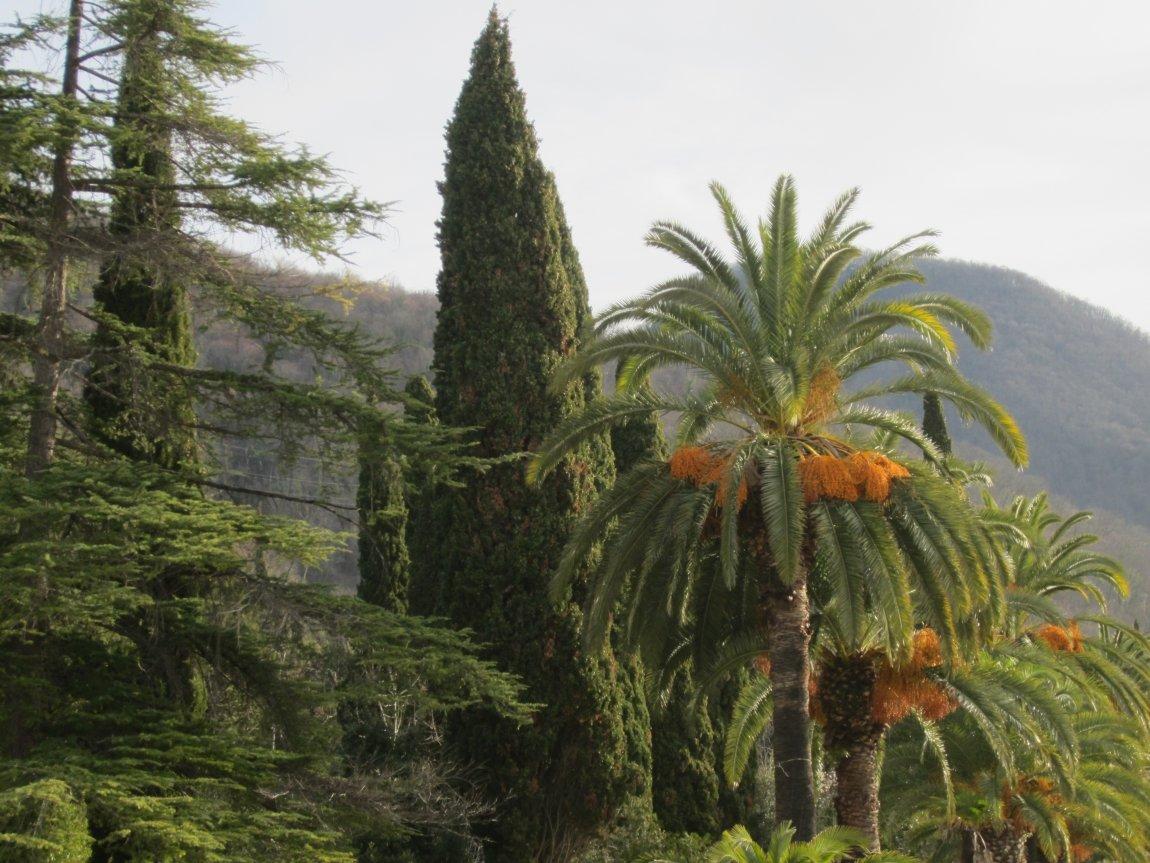 субтропические растения фото рисунок