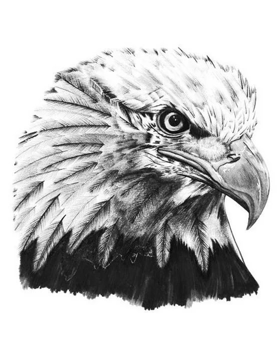 картинки эскизы тату орла часто является вдохновением