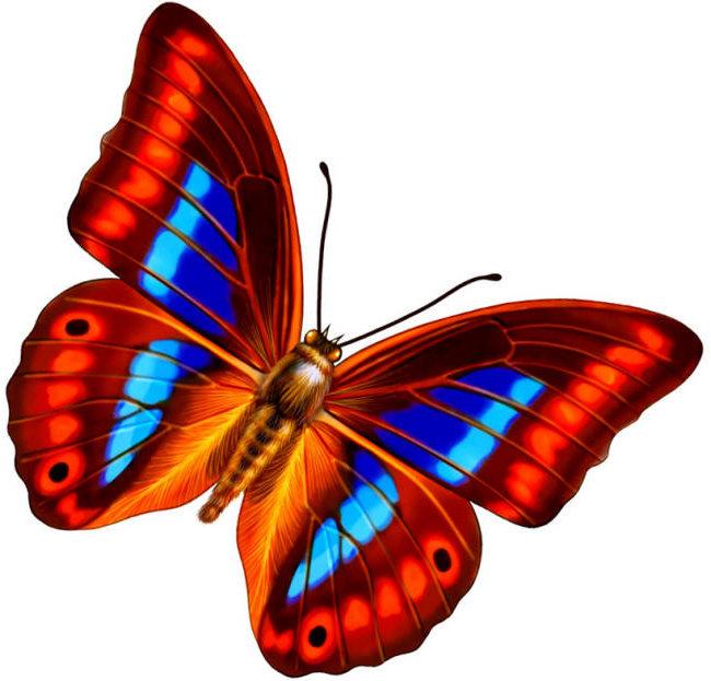 Картинки для детей рисованные бабочка