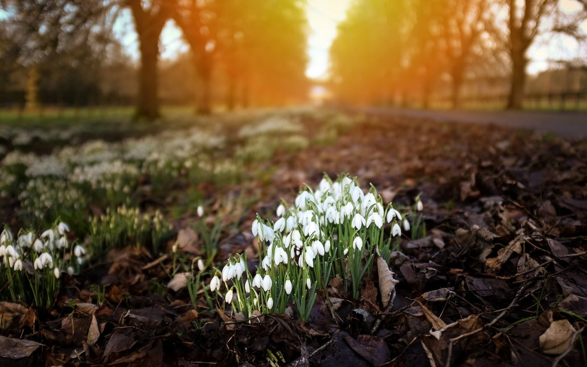 данный момент лучшие фотографы весна такие