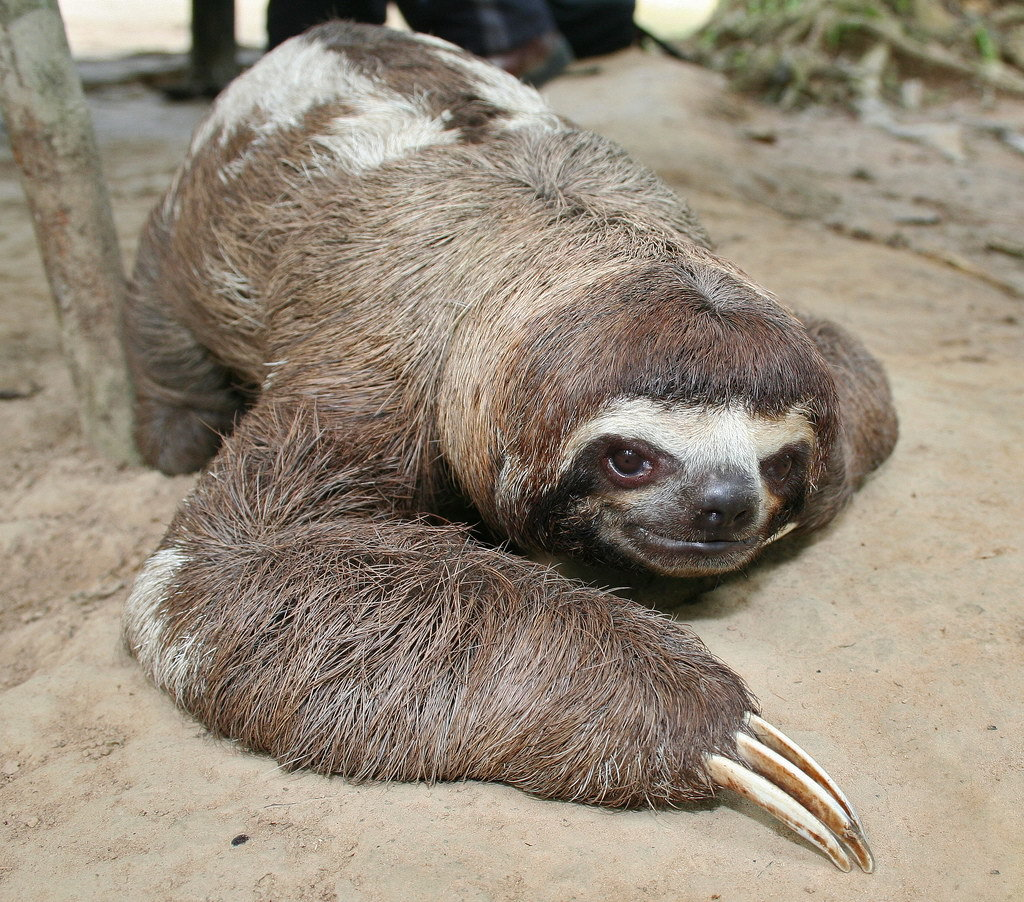 Адме, картинки ленивцев прикол