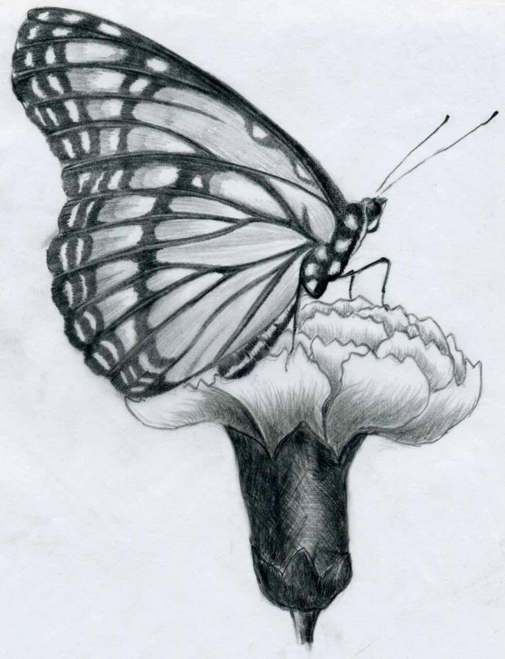 Морячок деревня, бабочки рисунки карандашом картинки
