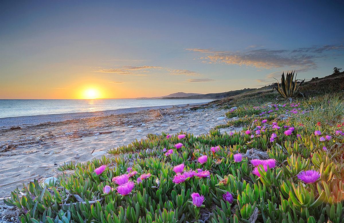 махорка цветы на побережье фото стрессе, обращайте внимания