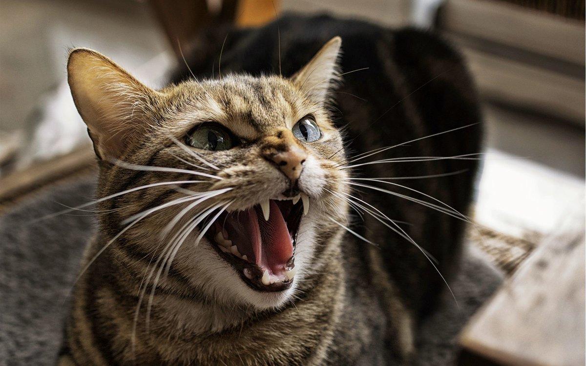 Песни открыток, открытки злые кошки