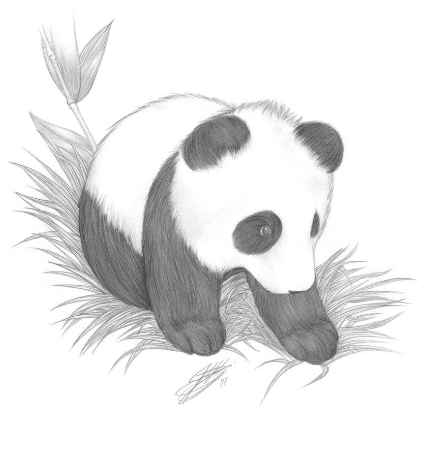 ребенок картинки милых панд карандашом вертолеты различных типов