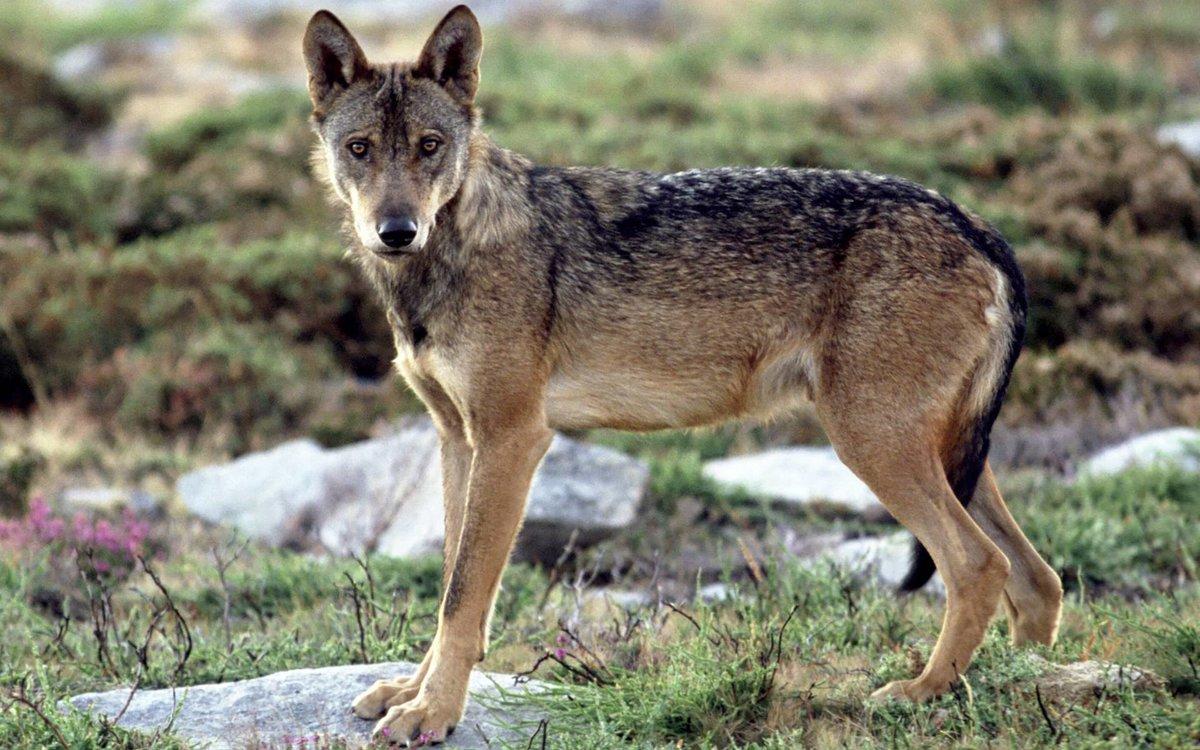 картинки европейских животных случае размытым