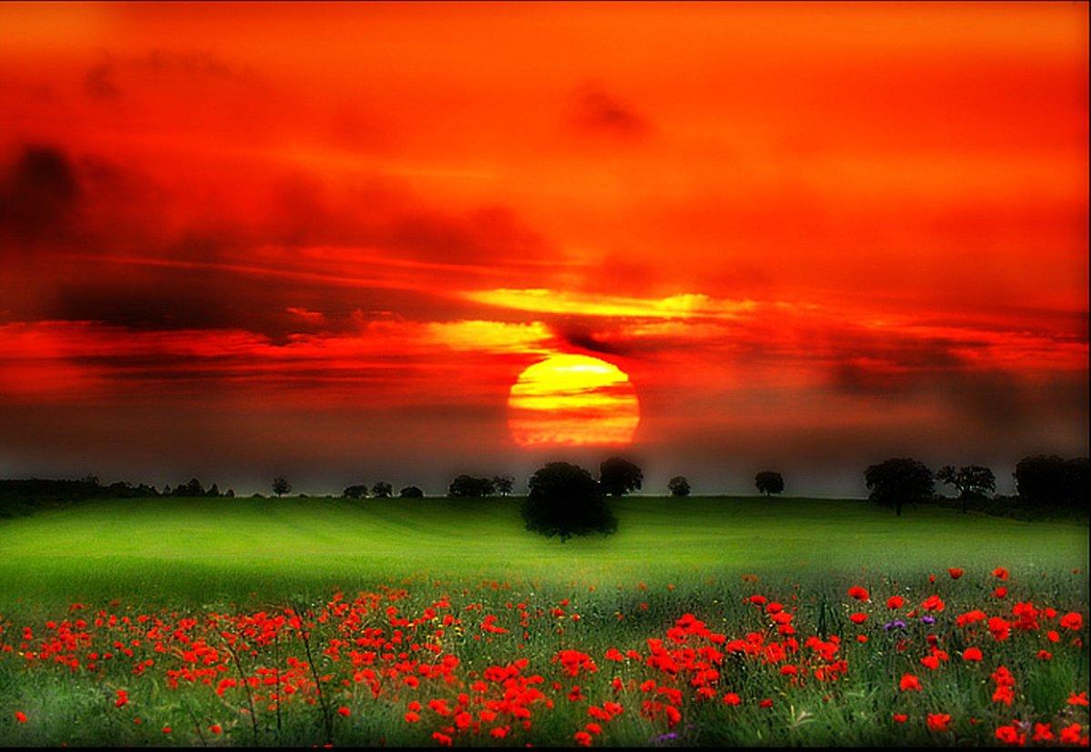 Открыток для, открытки восходящего солнца