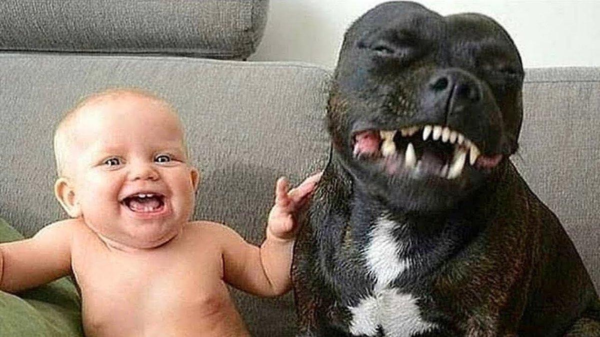 Картинки, прикольные детские картинки с животными до слез