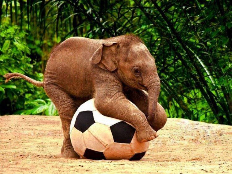 Подруге день, смешные картинки слон