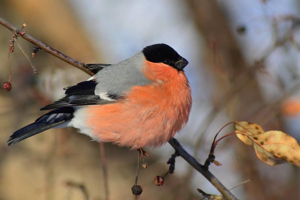 сети картинки птицы севера вышла зеленую