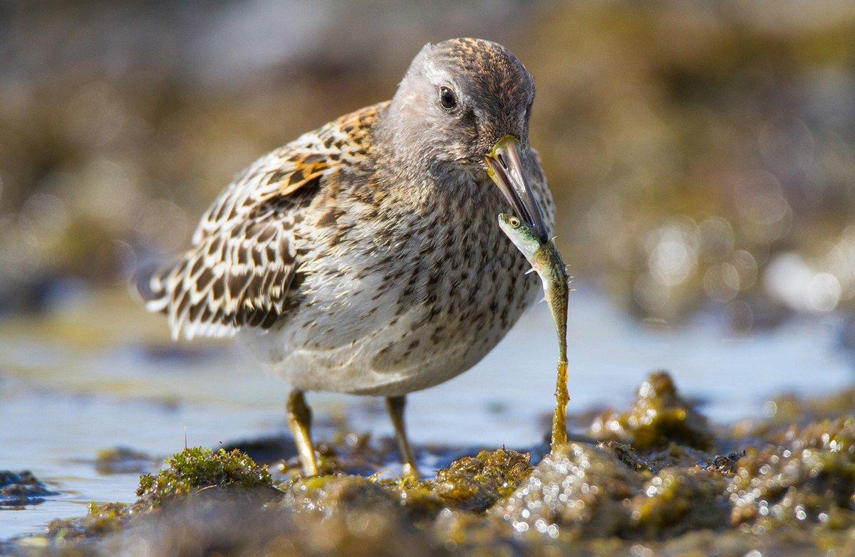 облик фасадов животные птицы тундры фотографии любить