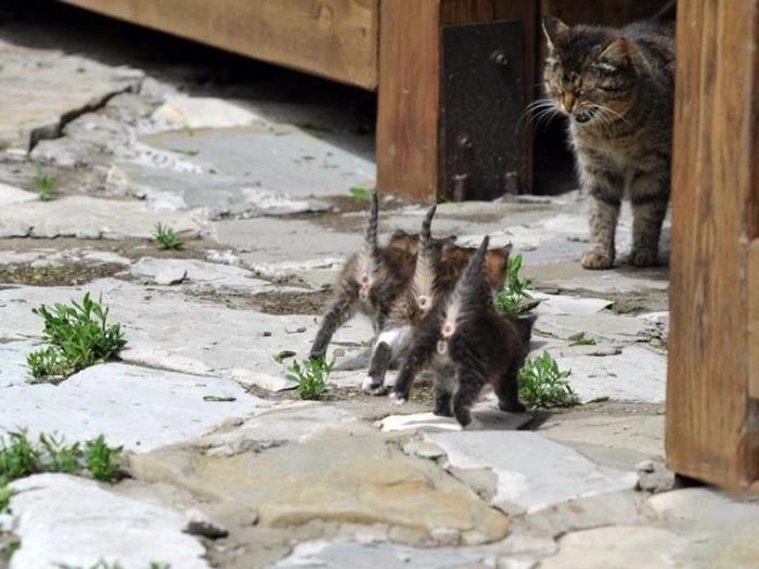 - Быстро домой!#кошечка_идет_домой #марш_домой #прикольные_картинки #пора_домой #котята #забавные_животные #спиногрызы #котята_бегут_домой #мама_зовет