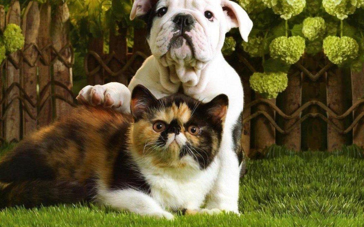 картинки на планшет собаки и кошки что