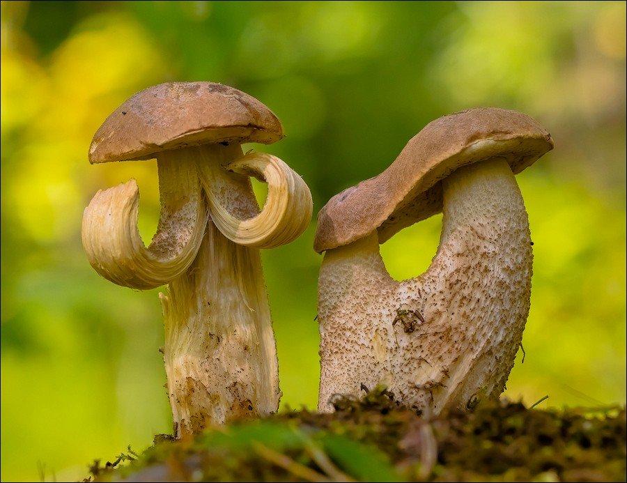 Приколы с грибами картинки, пожеланиями спокойной