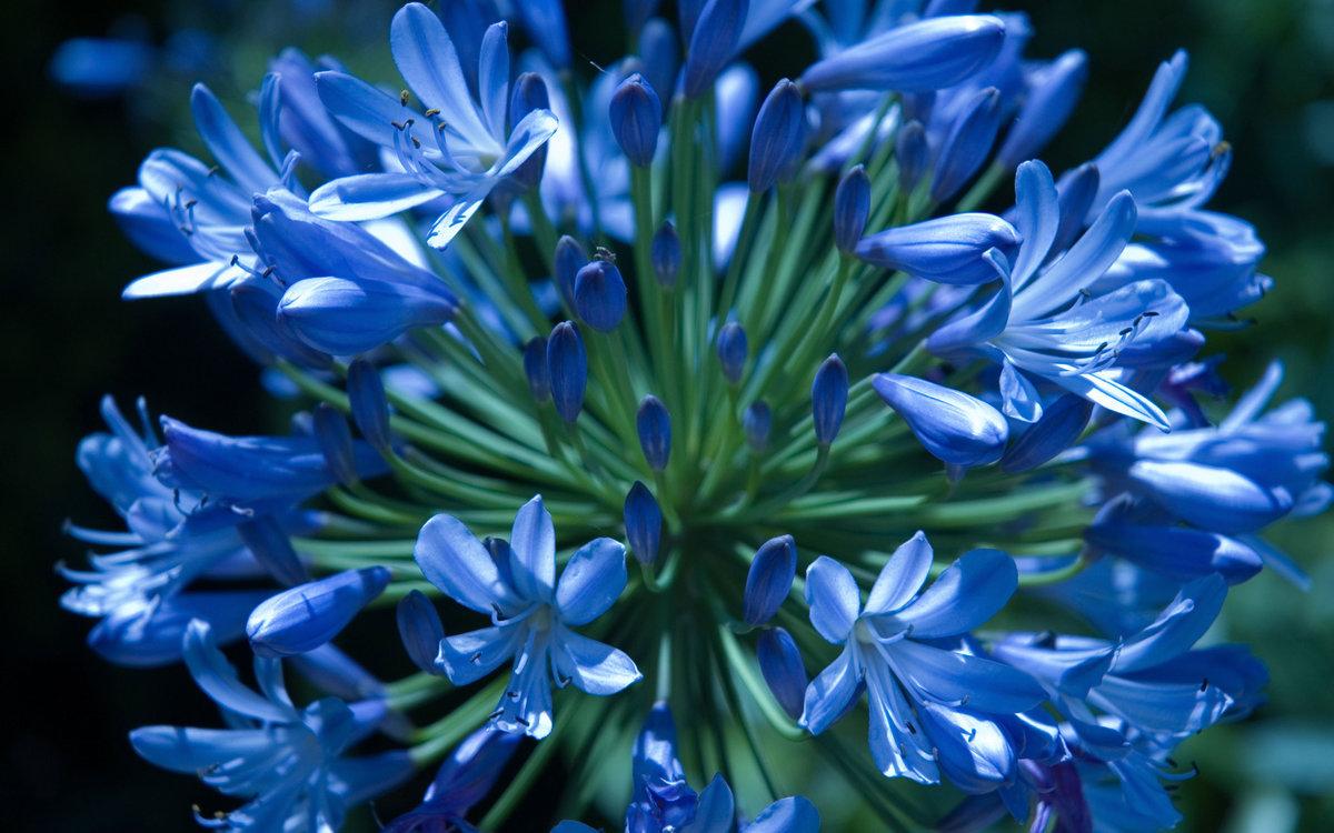 День рождения, синие цветы картинки с названиями