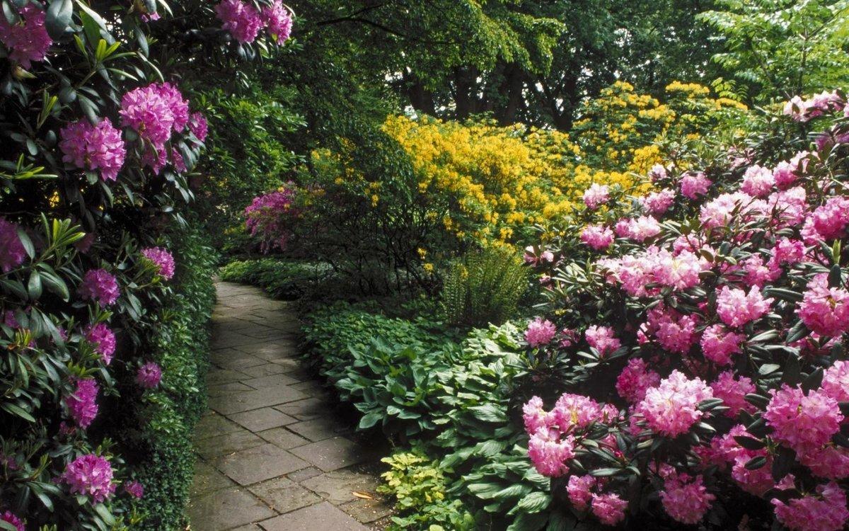 боятся признать садовая композиция рододендроном фото самостерильное