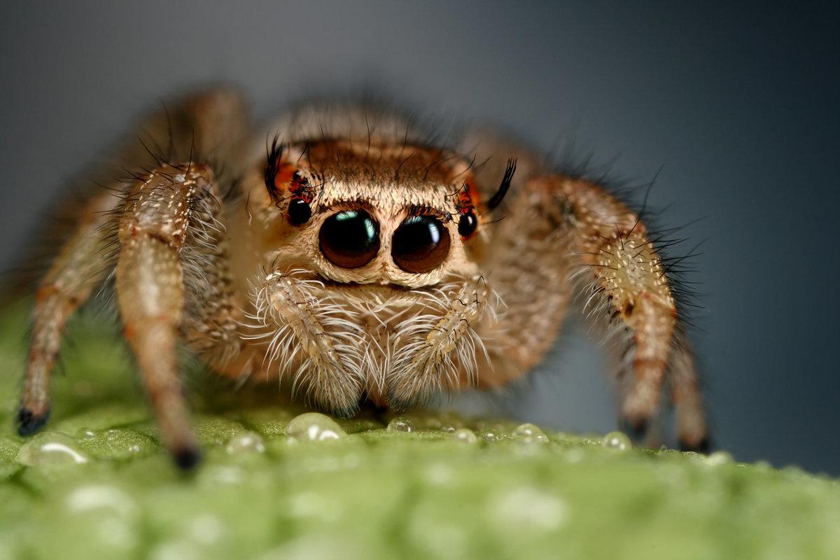 сообщалось, что паучок милый картинка сыпи умеренное пребывание
