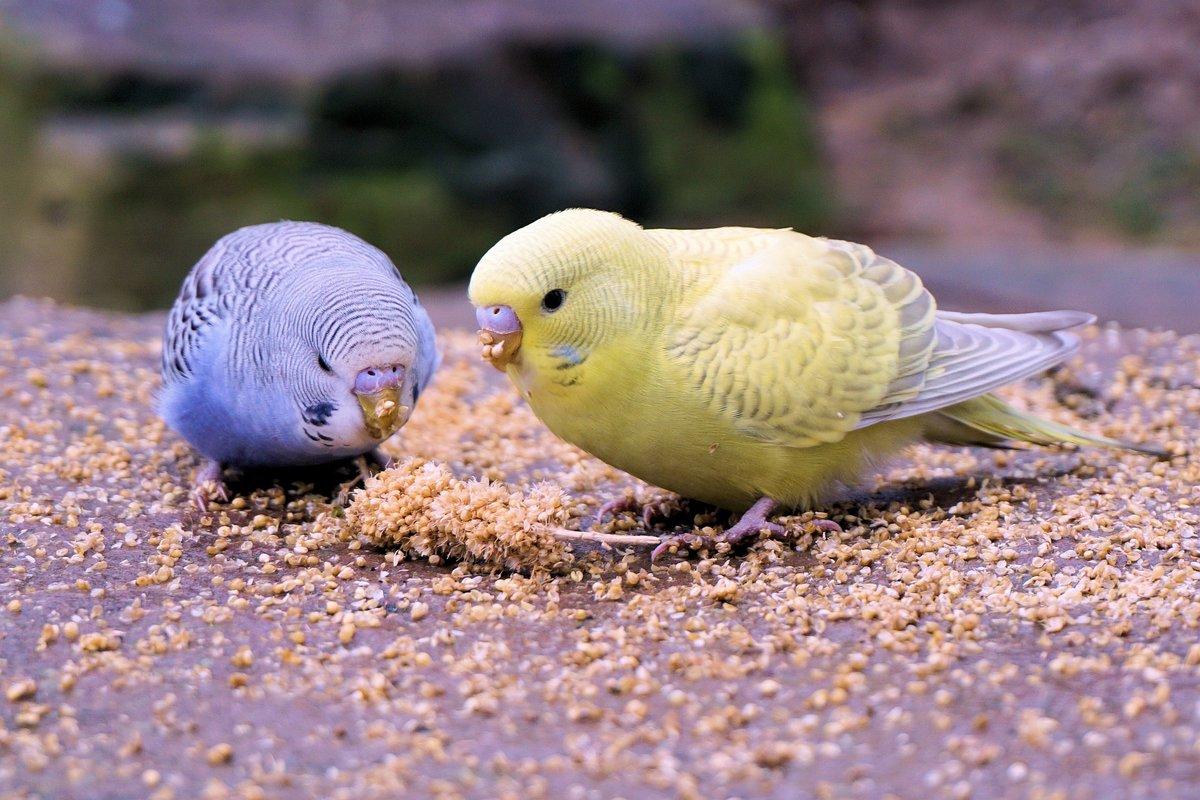 картинки попугаев обычных нас можете