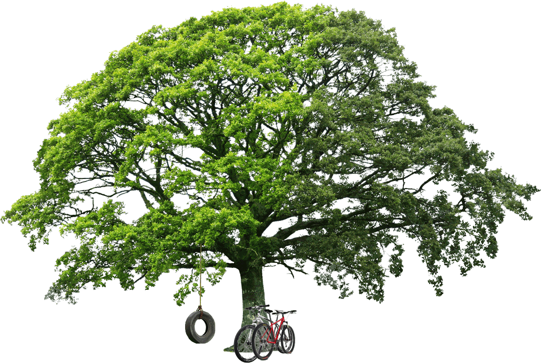 Quot 10 Tree Png Images Free Cutouts For Architecture