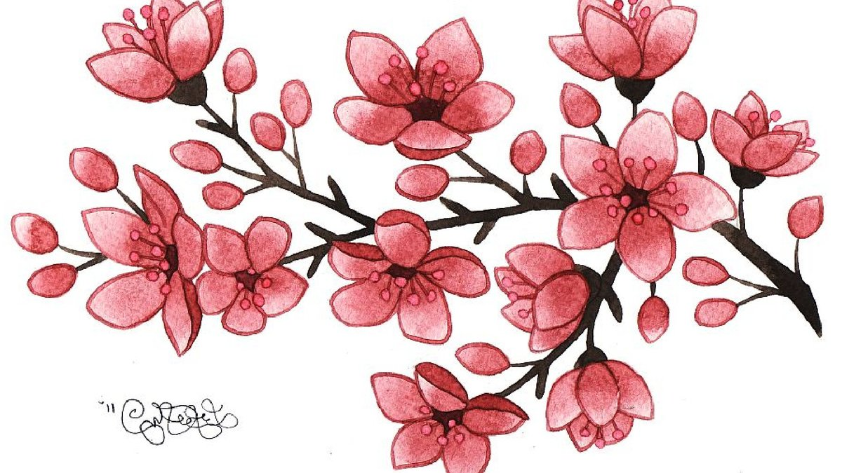 cherry blossom drawing - 900×560