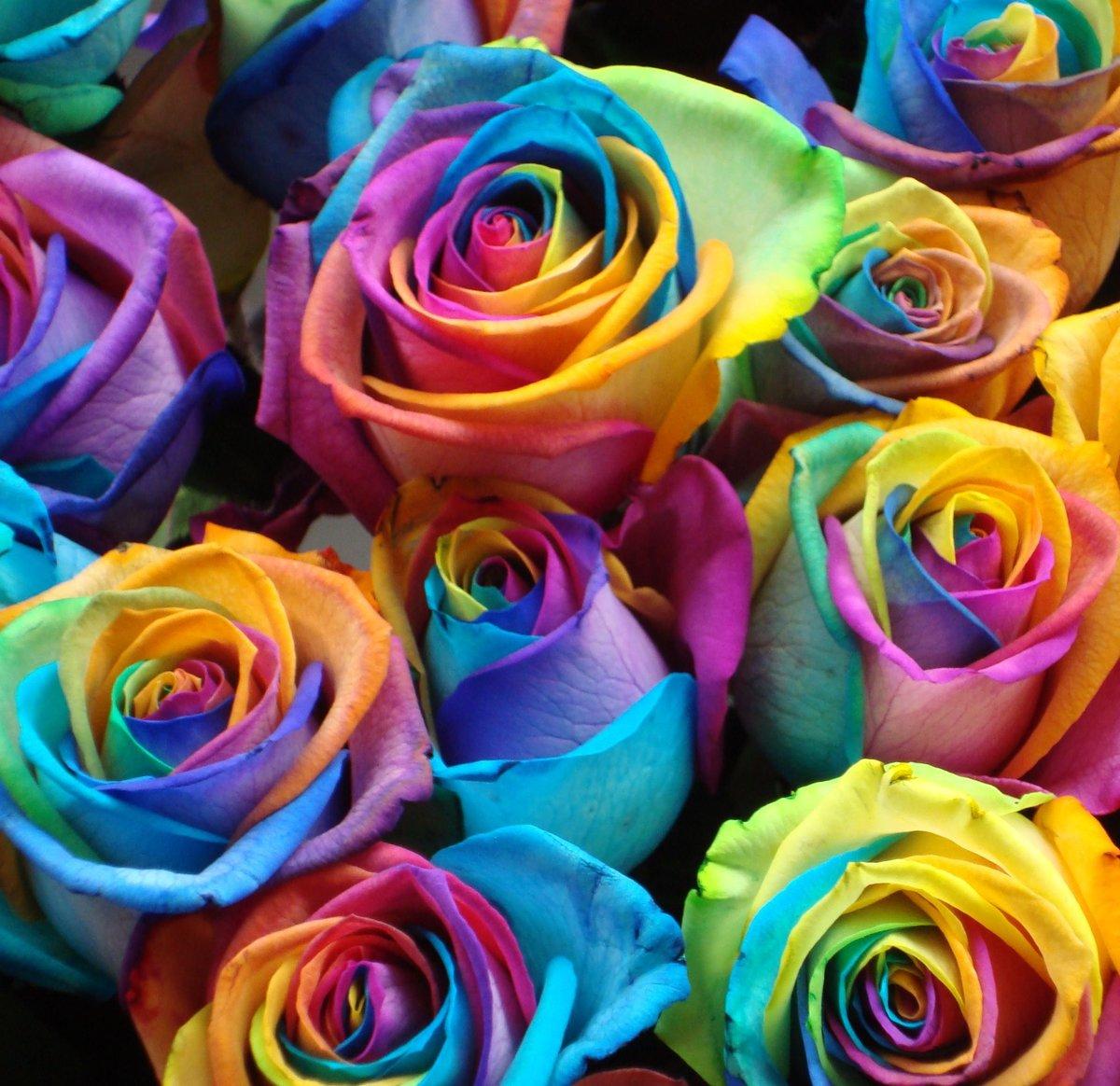 Фото цветы разноцветные