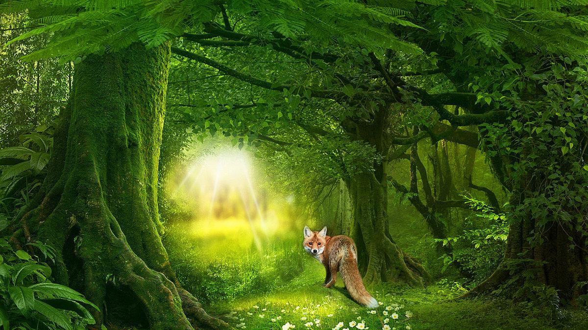 Сказочный лес открытка, поздравление днем рождения