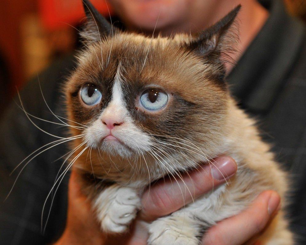Смешные коты фото и картинки