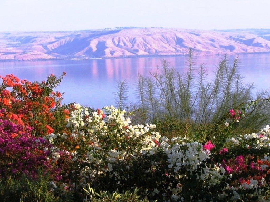 фамилия фамилия израиль картинки цветов поделитесь своей