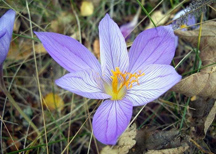 фотографии растений которые нуждаются в охране организации данном