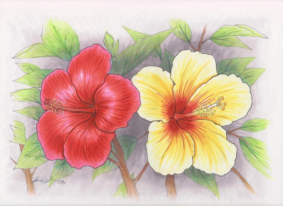 Картинки цветов нарисованные