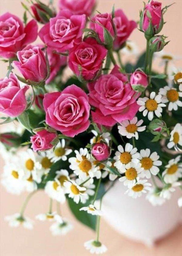 Картинки с розами ромашками, картинки спокойной