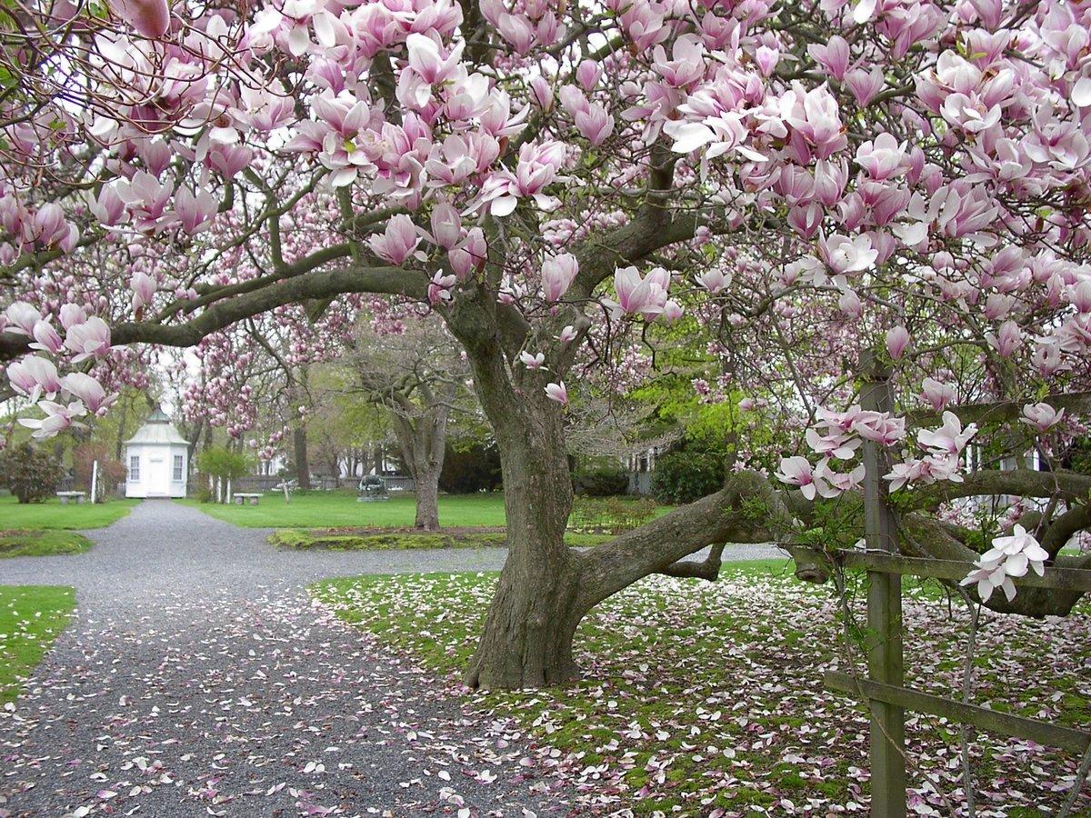 велопоход цветущие деревья в сочи фото делала ваша бабушка
