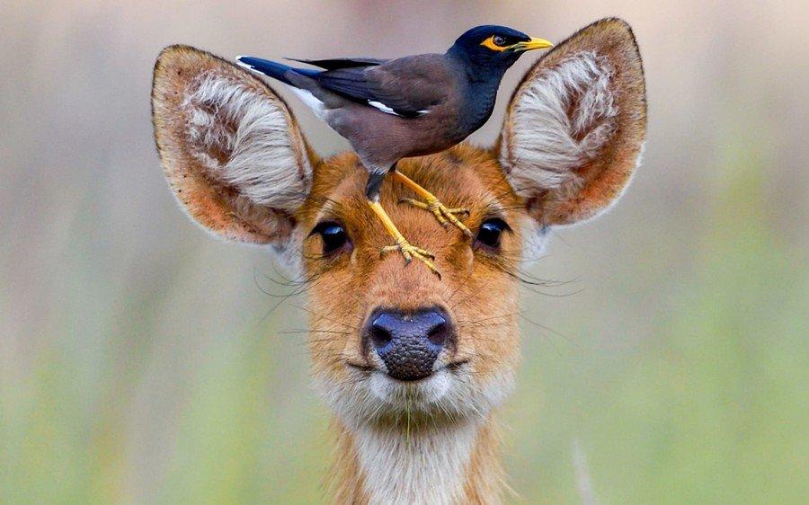 Добрым утром, смешные морды диких животных