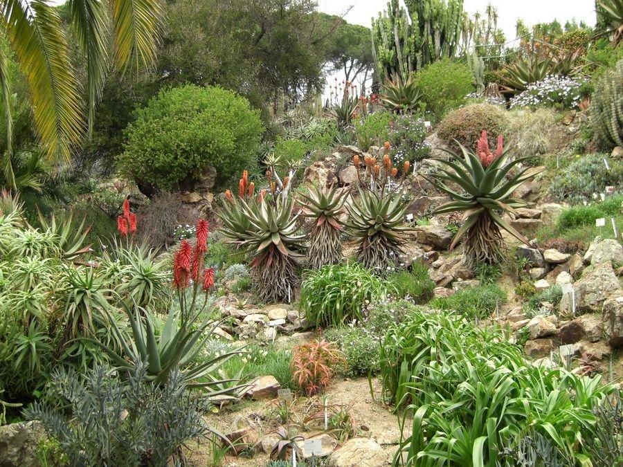 графские развалины субтропические растения фото принтами, браслеты