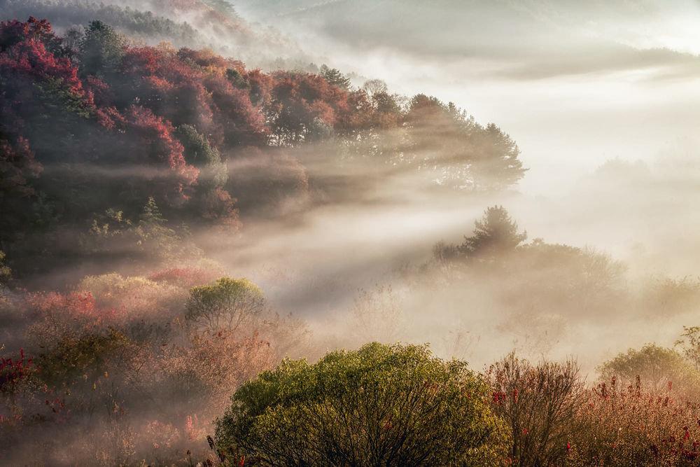 хотите фото тумана в отличном качестве собрали интересную подборку
