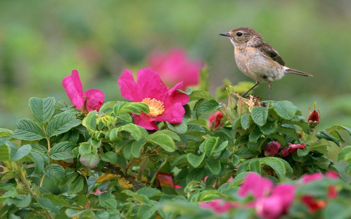 Картинки с цветами и птицами, елочная игрушка ветке