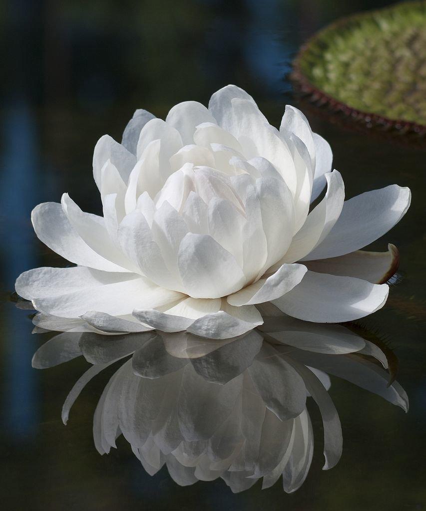 наружние потрескивать фото самого красивого цветка в мире прикольный, много
