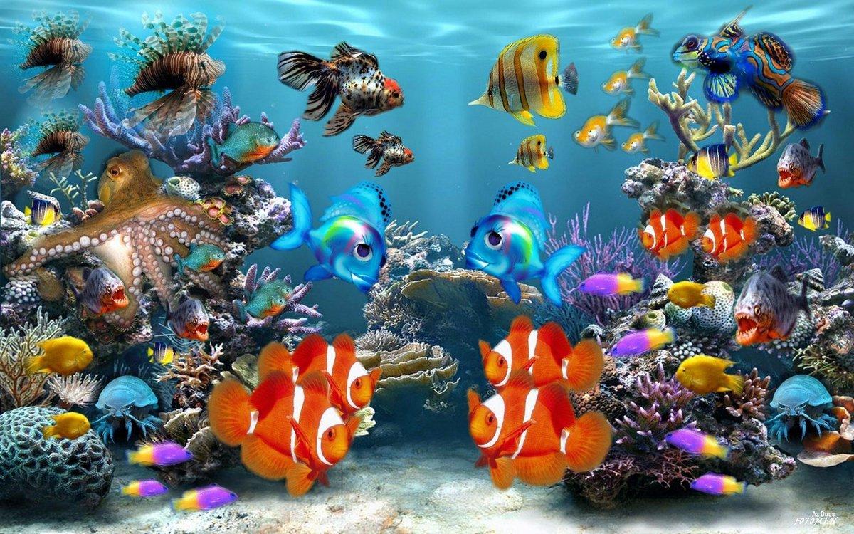 3d Under The Sea Wallpaper Wallpapersafari Card From User Olga