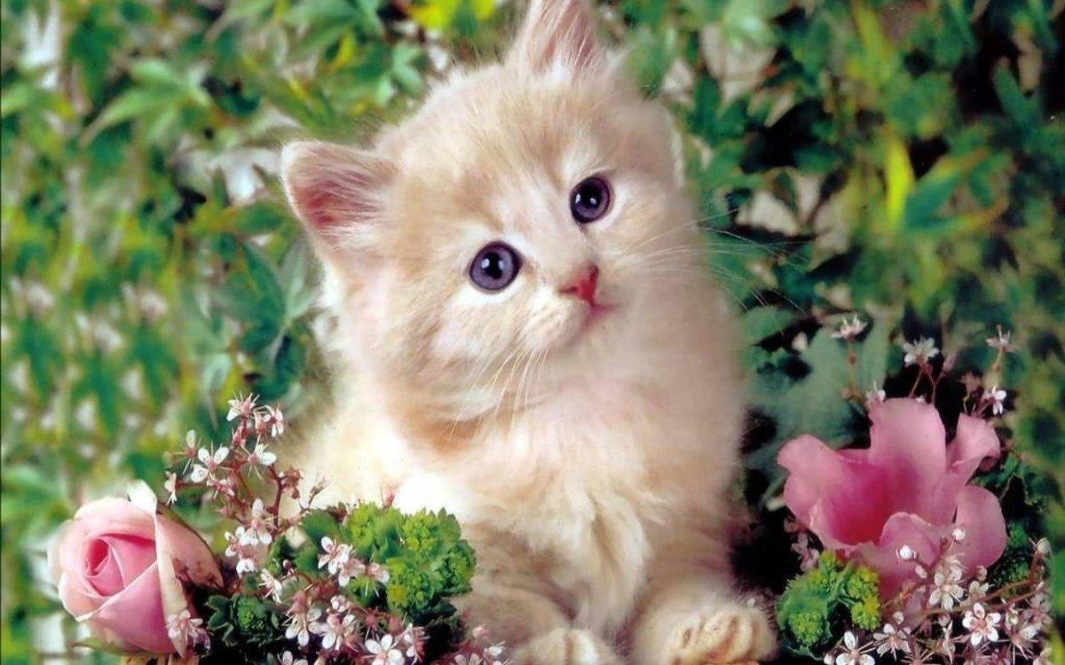 Днем, открытка котенком