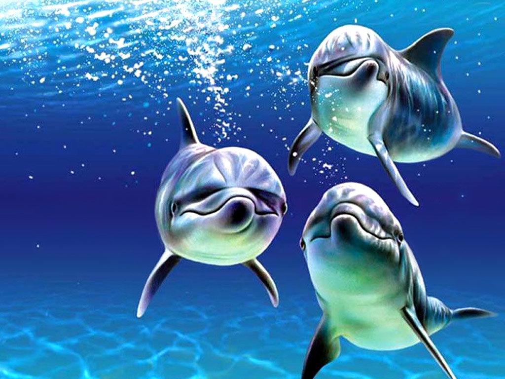 Картинки морские животные с анимацией, открытки днем рождения