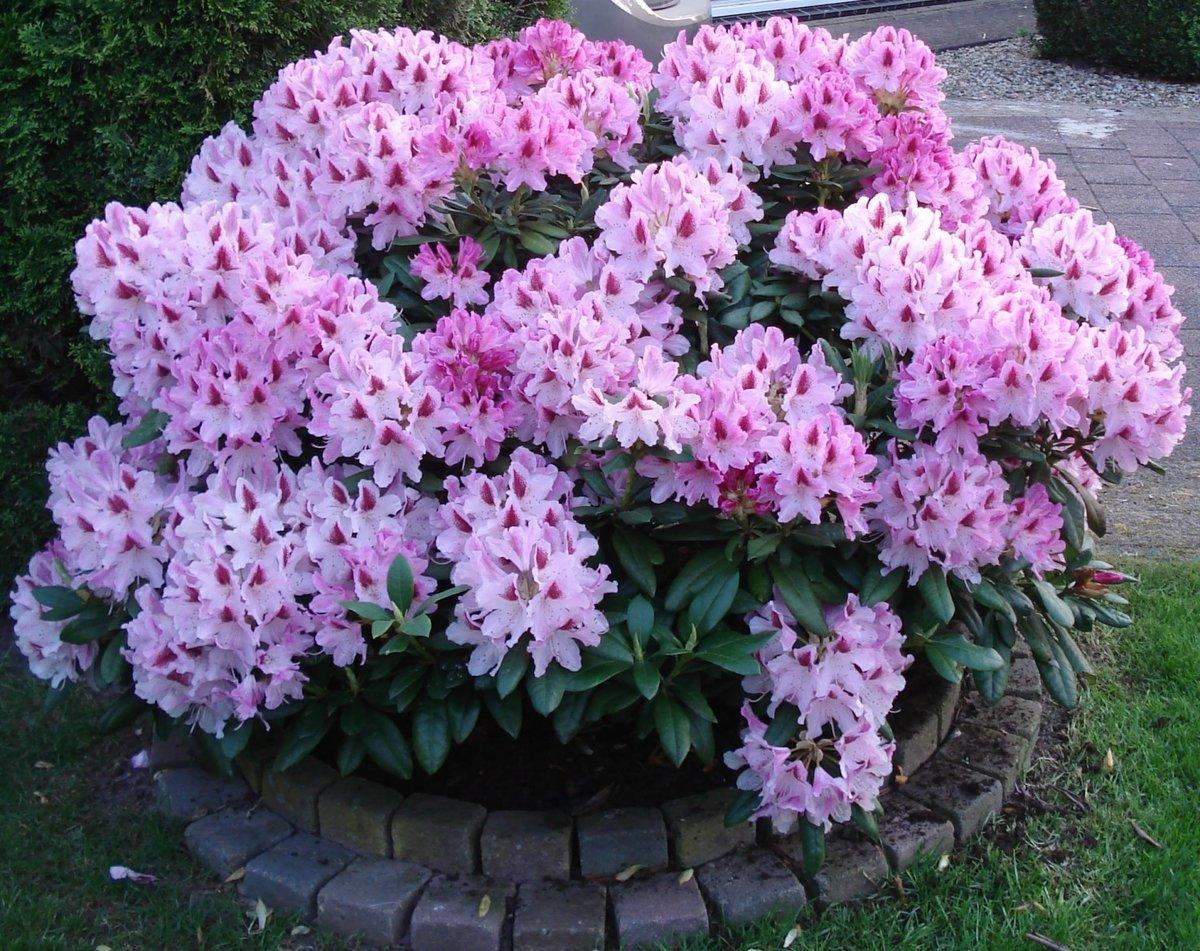Цветов купить, красивые цветы для дачи фото с названиями
