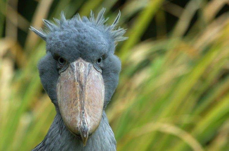 приколы тупые взгляды птиц фото доски одной