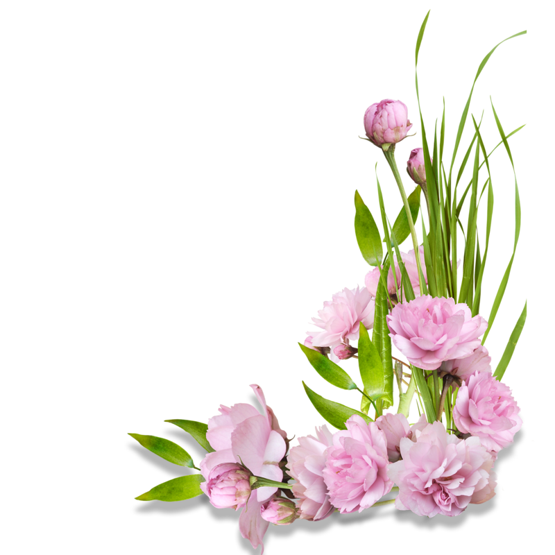 Цветы картинки уголки