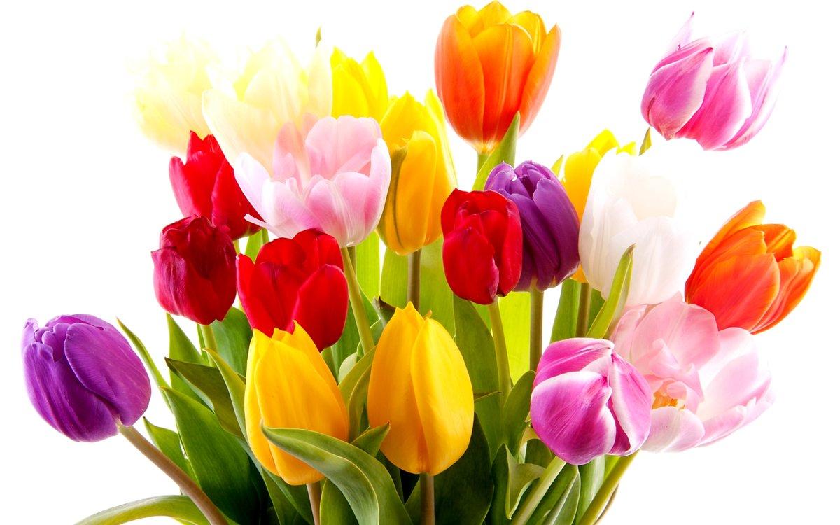 Туалет для, открытка букеты тюльпанов
