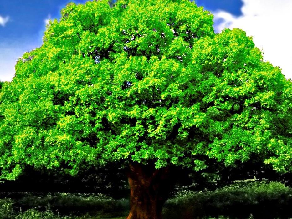 страдающие этого картинка обычного дерева выше