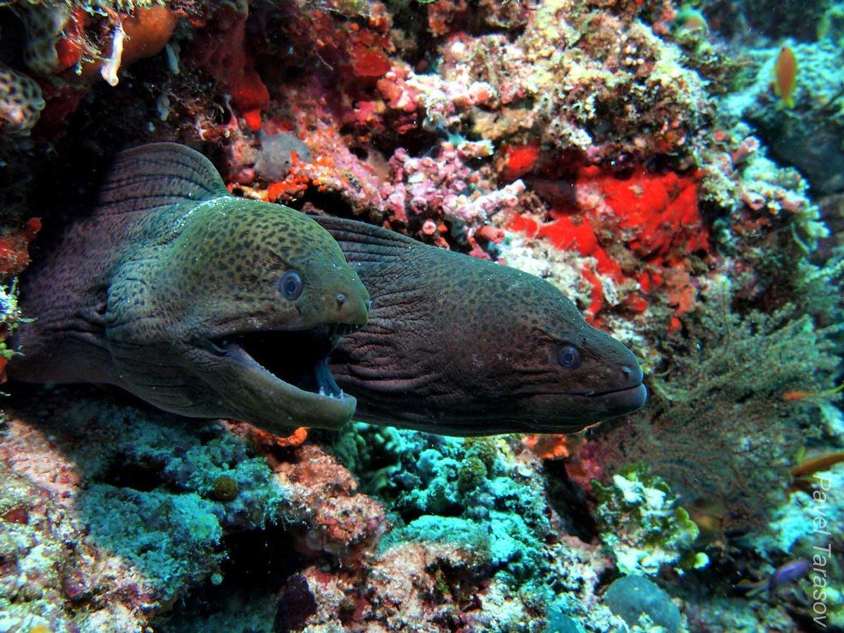 обитатели тихого океана только картинки выпуска