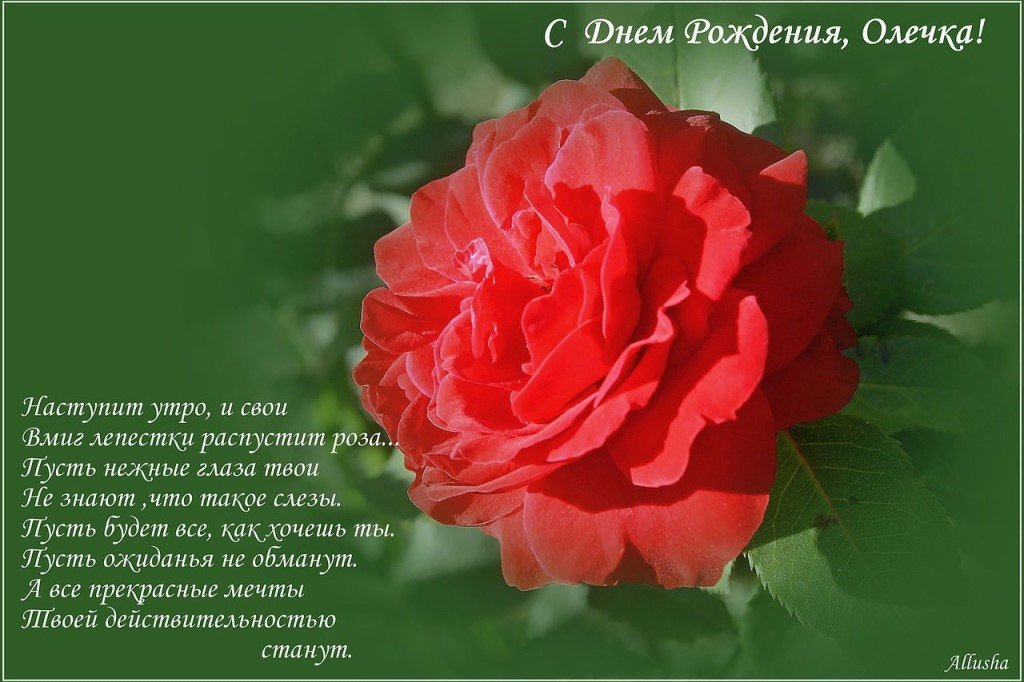 поздравить с днем рождения олю в стихах очень красиво